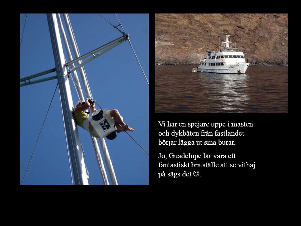 Vi har en spejare uppe i masten och dykbåten från fastlandet börjar lägga ut sina burar.