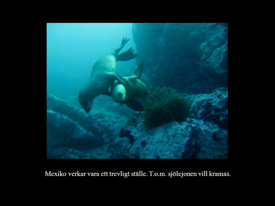 Mexiko verkar vara ett trevligt ställe. T.o.m. sjölejonen vill kramas.