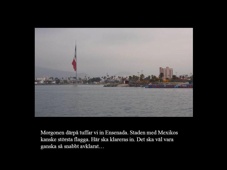 Morgonen därpå tuffar vi in Ensenada. Staden med Mexikos kanske största flagga.