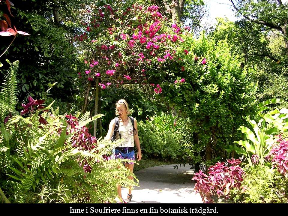 Inne i Soufriere finns en fin botanisk trädgård.