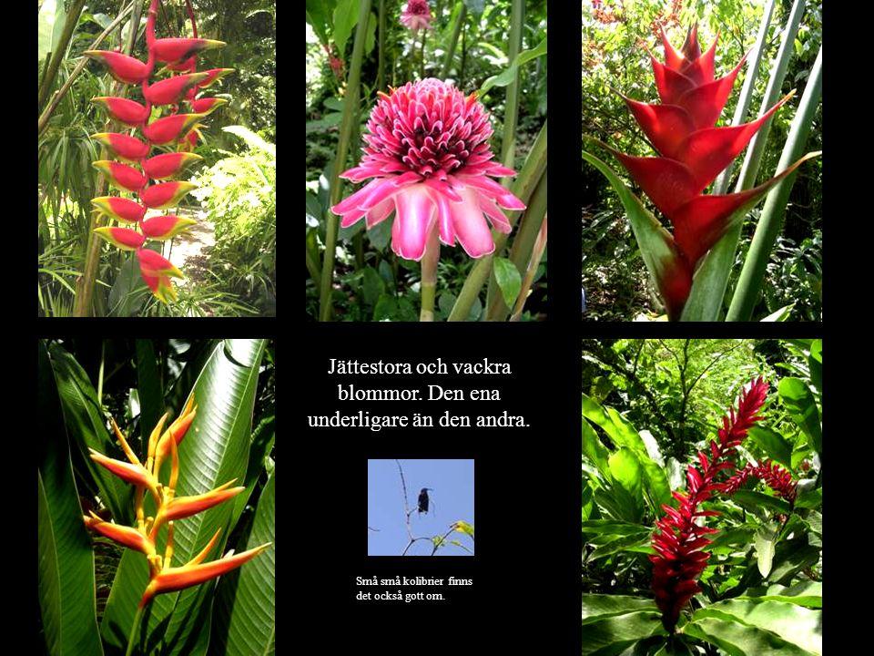 Jättestora och vackra blommor. Den ena underligare än den andra.