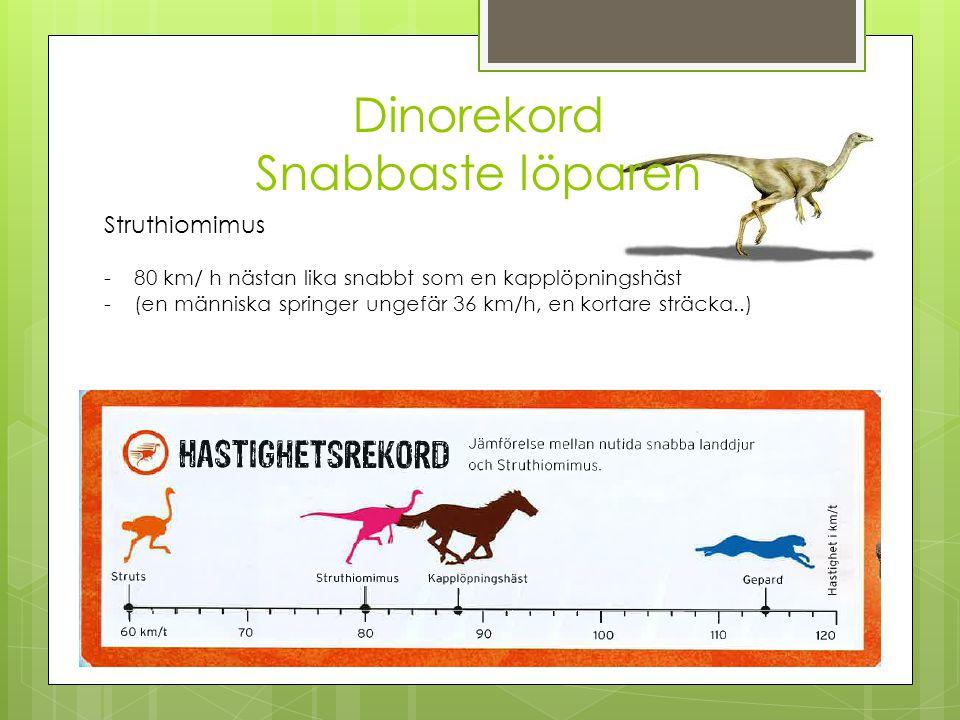 Dinorekord Snabbaste löparen Struthiomimus -80 km/ h nästan lika snabbt som en kapplöpningshäst -(en människa springer ungefär 36 km/h, en kortare str