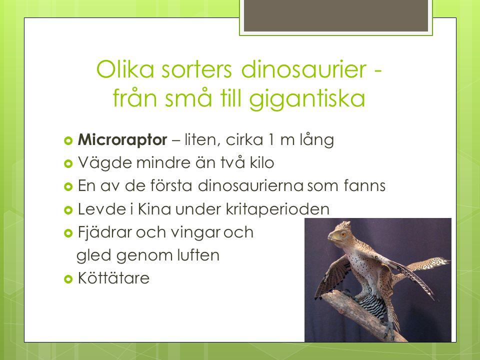 Olika sorters dinosaurier - från små till gigantiska  Struthiomimus – liten  Betyder strutshärmare, för att den liknar en struts och var ungefär lika stor  En av de snabbaste  Litet huvud och lång hals och svans, som behövdes för att hålla balansen  Allätare  Levde i Nordamerika under yngre Krita