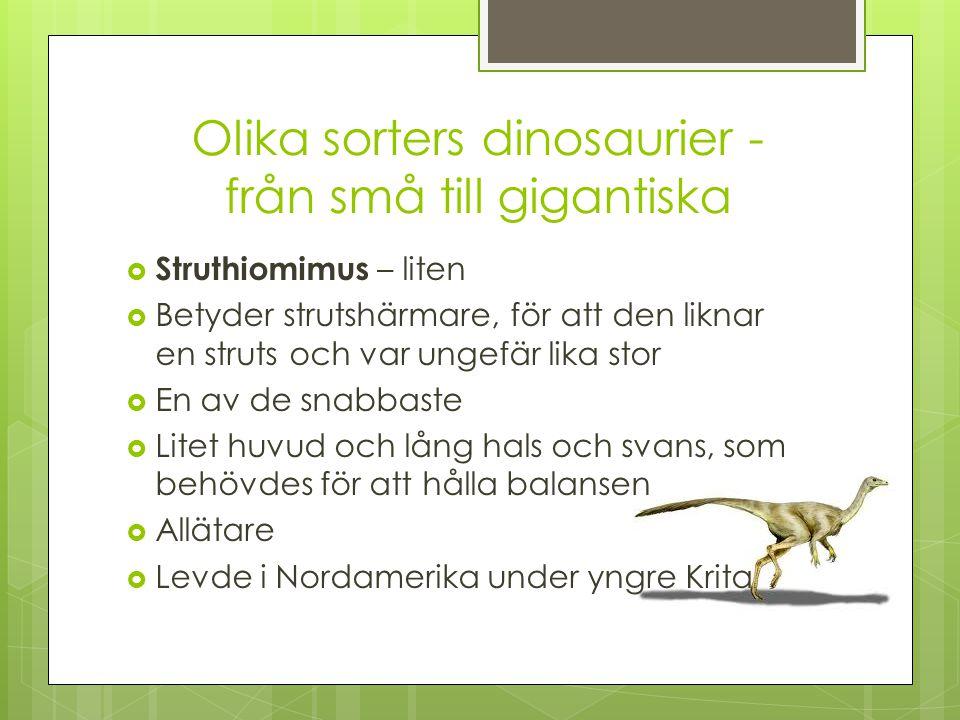 Olika sorters dinosaurier - från små till gigantiska  Struthiomimus – liten  Betyder strutshärmare, för att den liknar en struts och var ungefär lik