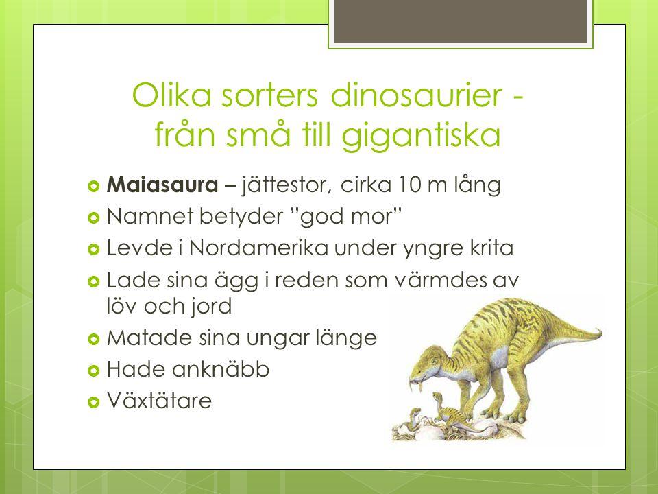 Olika sorters dinosaurier - från små till gigantiska  Diplodocus – gigantisk, cirka 27 m lång  Längsta svansen som den tros ha pratat med  Växtätare, 100-tals kilo blad om dagen  Långa, smala tänder  Levde i Nordamerika under Trias och Jura  Kunde inte lyfta huvudet så högt utan drog upp träden med rötterna