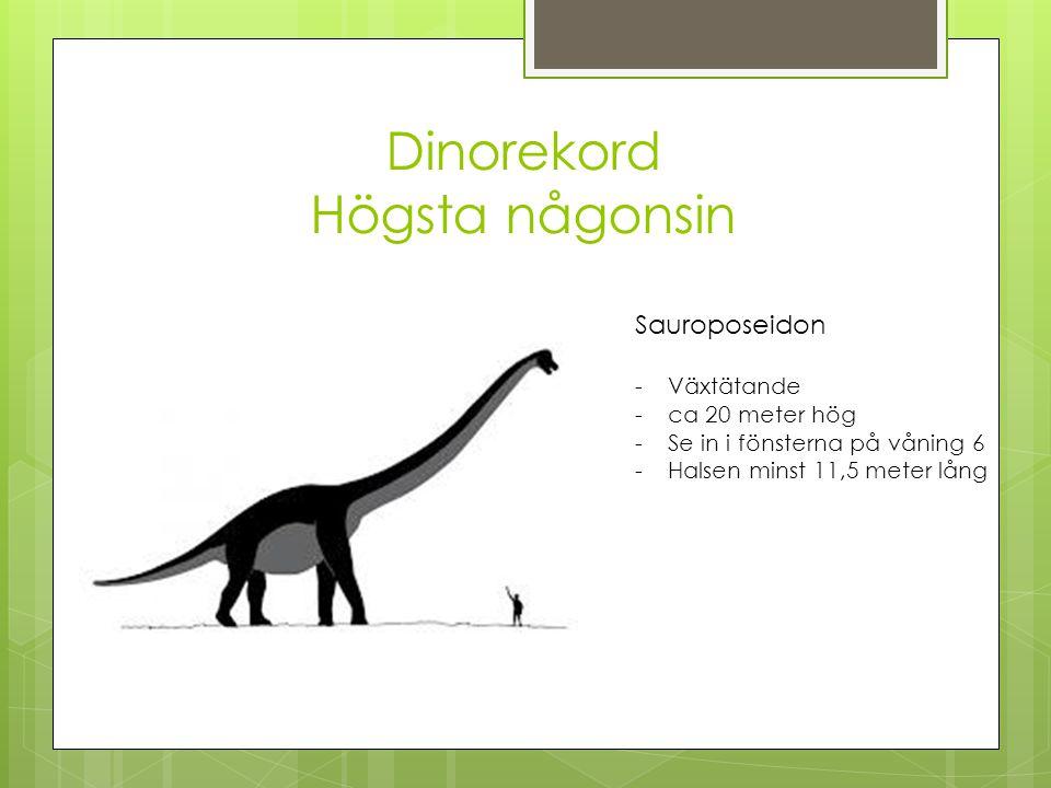 Dinorekord Högsta någonsin Sauroposeidon -Växtätande -ca 20 meter hög -Se in i fönsterna på våning 6 -Halsen minst 11,5 meter lång