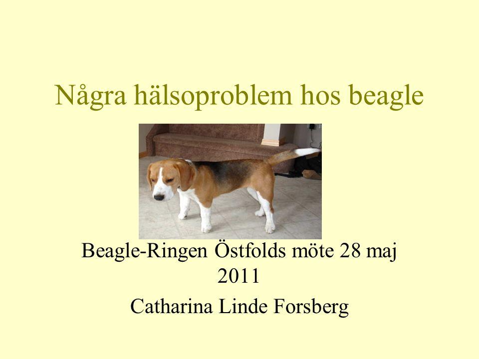 Några hälsoproblem hos beagle Epilepsi Beagle pain syndrome (aseptisk meningit) Kinesbeaglesyndromet - MLS Chondrodystrofi Höftledsdysplasi
