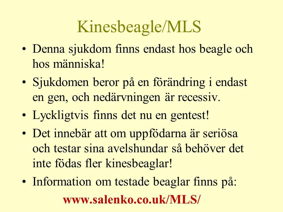 Kinesbeagle/MLS Denna sjukdom finns endast hos beagle och hos människa.