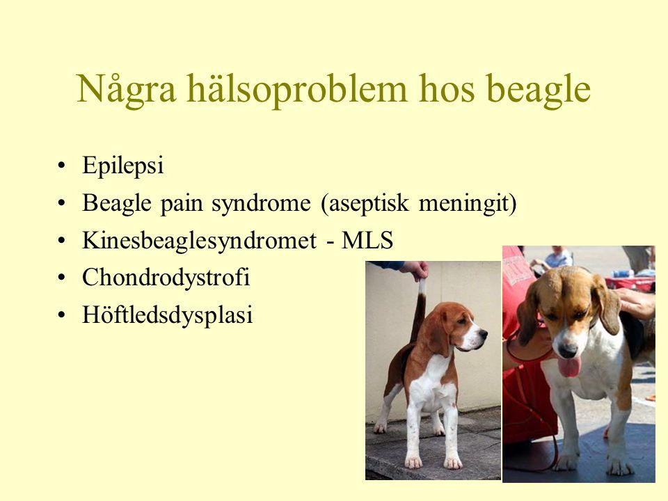 Chinese Beagle Syndrome/MLS Typisk sittposition Obs öronvecket!