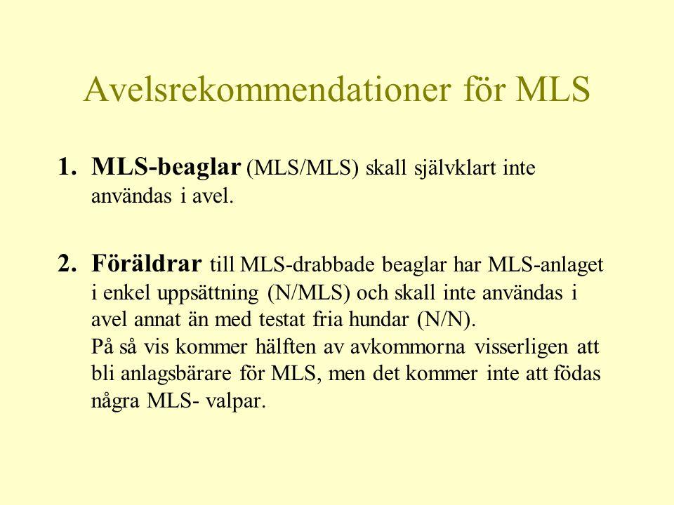 Avelsrekommendationer för MLS 1.MLS-beaglar (MLS/MLS) skall självklart inte användas i avel.