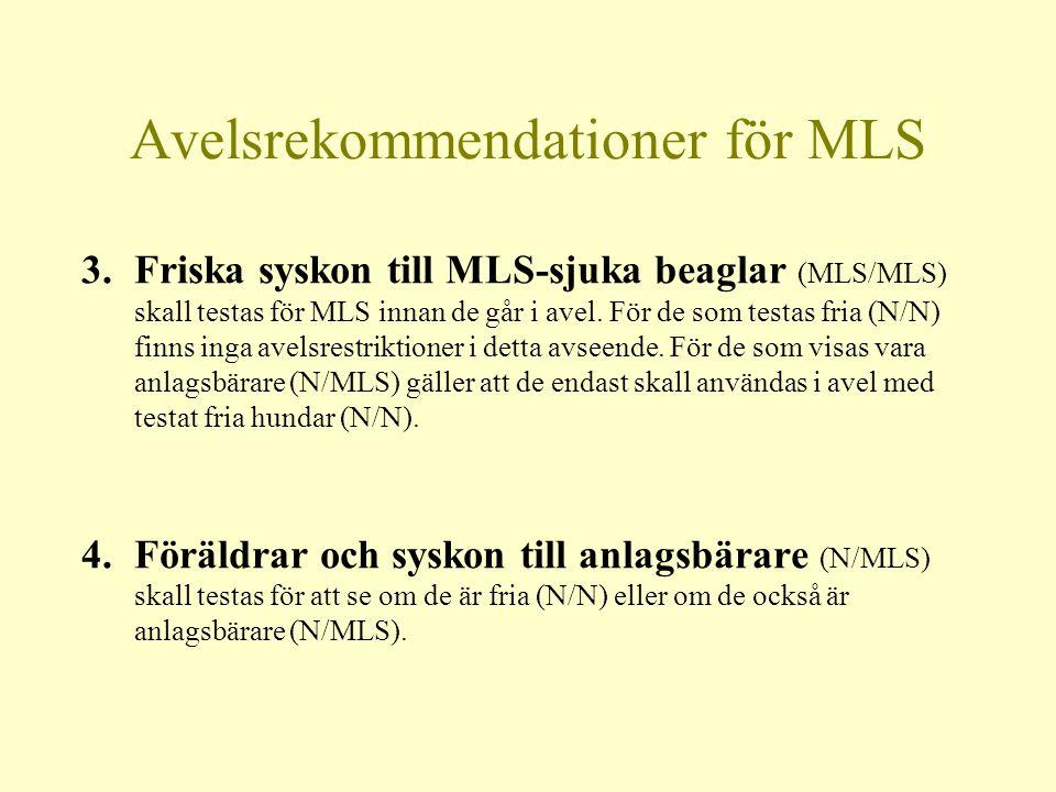 Avelsrekommendationer för MLS 3.Friska syskon till MLS-sjuka beaglar (MLS/MLS) skall testas för MLS innan de går i avel.