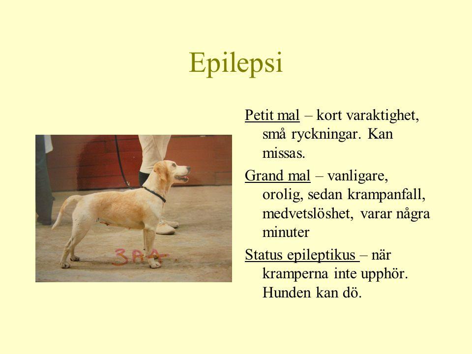 Epilepsi Genetiskt betingad (vanligast), eller förvärvad Debuterar hos beagle från 3 mån till 9 års ålder Hos beagle vanligast med lindrigare form av anfall
