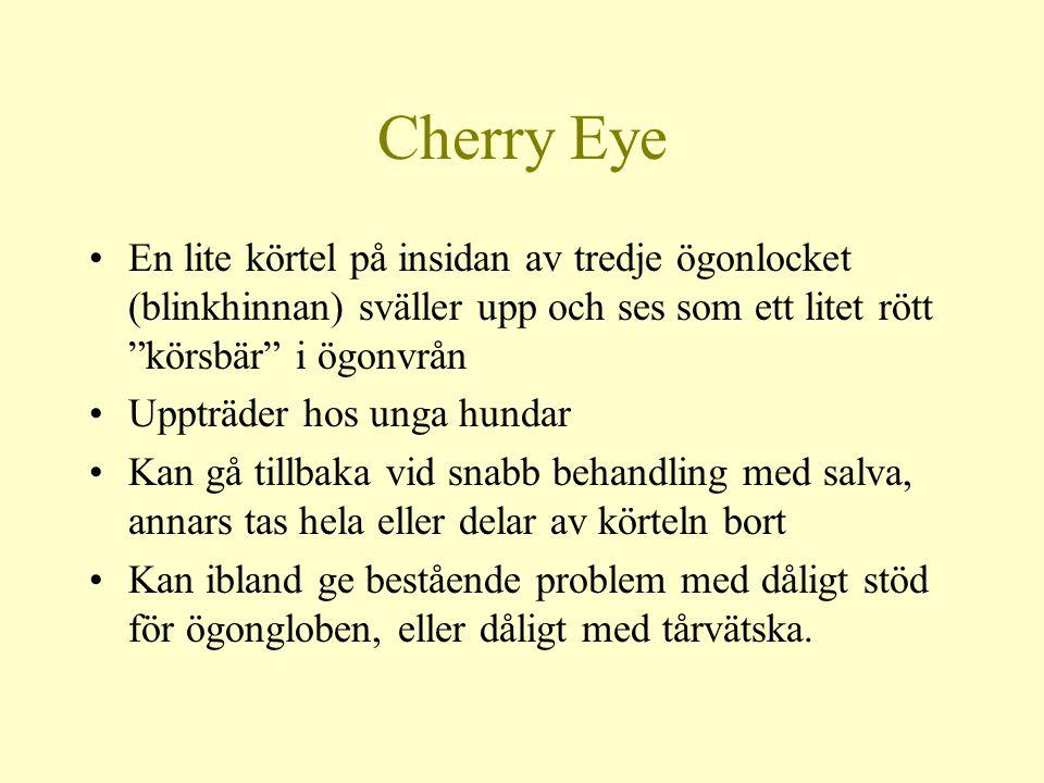 Cherry Eye En lite körtel på insidan av tredje ögonlocket (blinkhinnan) sväller upp och ses som ett litet rött körsbär i ögonvrån Uppträder hos unga hundar Kan gå tillbaka vid snabb behandling med salva, annars tas hela eller delar av körteln bort Kan ibland ge bestående problem med dåligt stöd för ögongloben, eller dåligt med tårvätska.