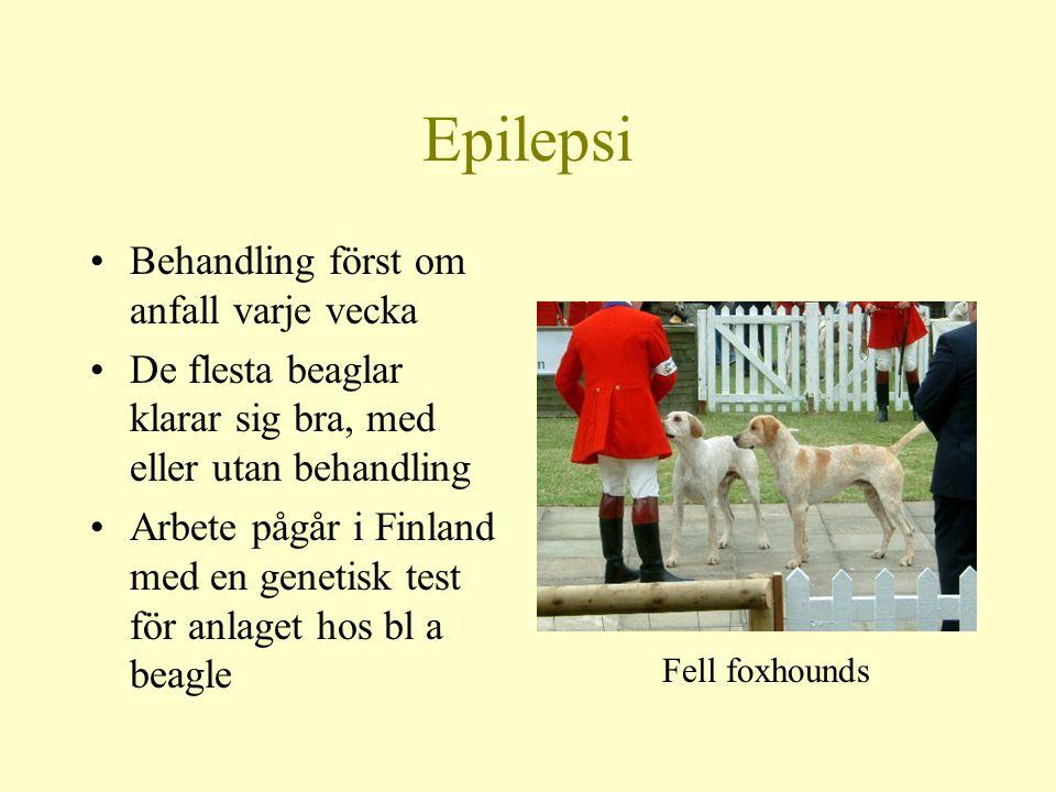 Epilepsi Behandling först om anfall varje vecka De flesta beaglar klarar sig bra, med eller utan behandling Arbete pågår i Finland med en genetisk test för anlaget hos bl a beagle Fell foxhounds