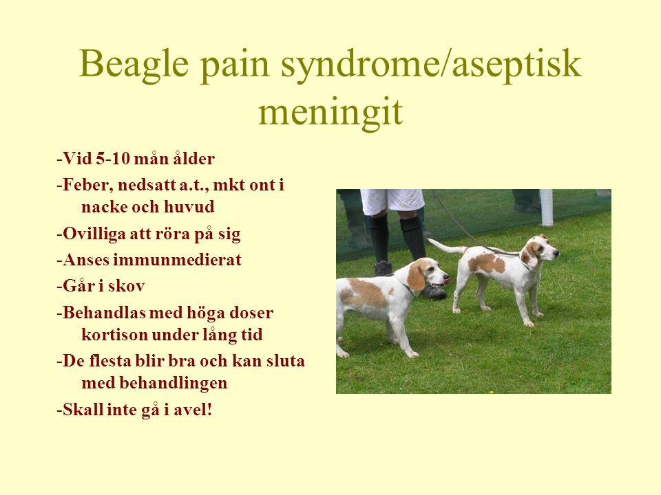 Beagle pain syndrome/aseptisk meningit -Vid 5-10 mån ålder -Feber, nedsatt a.t., mkt ont i nacke och huvud -Ovilliga att röra på sig -Anses immunmedierat -Går i skov -Behandlas med höga doser kortison under lång tid -De flesta blir bra och kan sluta med behandlingen -Skall inte gå i avel!