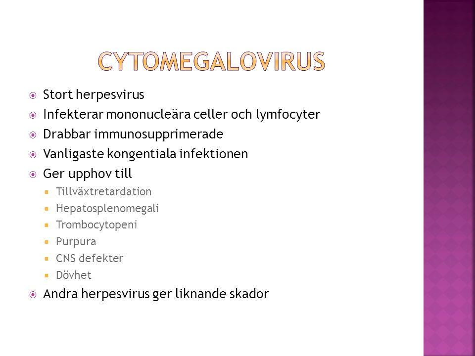  Stort herpesvirus  Infekterar mononucleära celler och lymfocyter  Drabbar immunosupprimerade  Vanligaste kongentiala infektionen  Ger upphov til