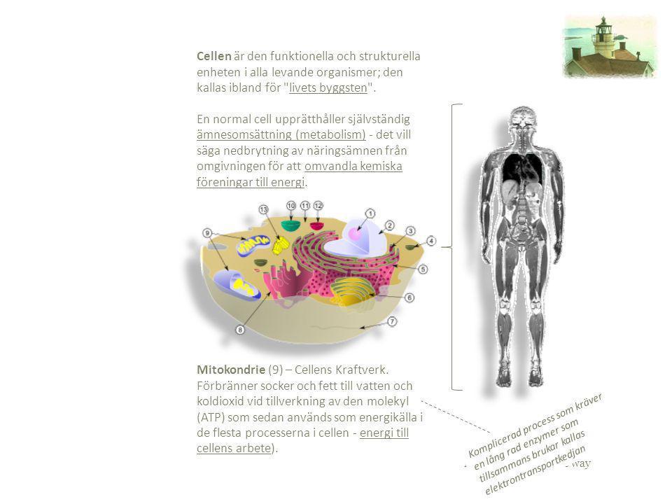 Ewa Berthagen – the way Cellen är den funktionella och strukturella enheten i alla levande organismer; den kallas ibland för
