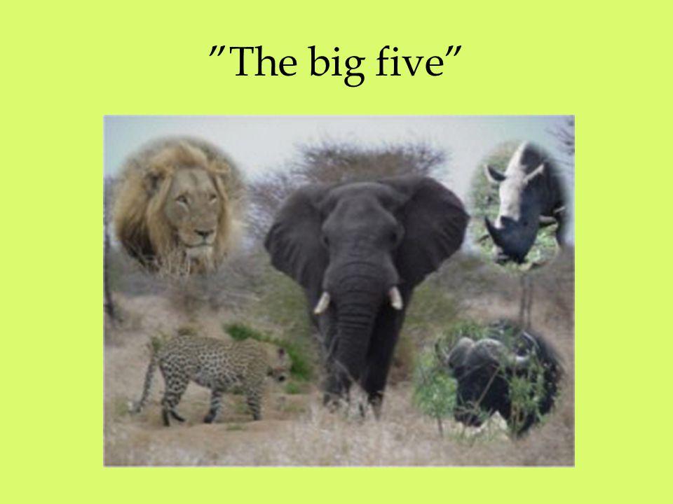 """The big five"""