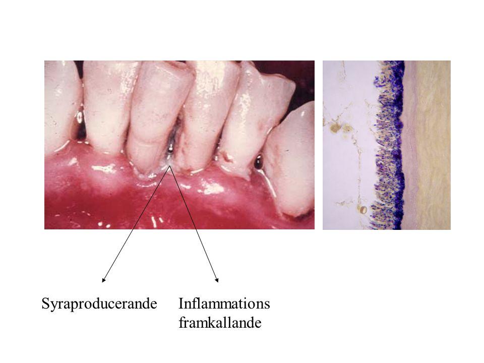SyraproducerandeInflammations framkallande
