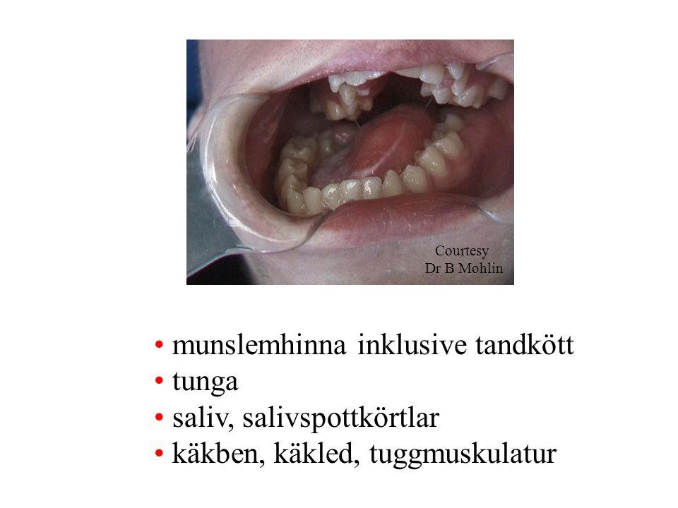 munslemhinna inklusive tandkött tunga saliv, salivspottkörtlar käkben, käkled, tuggmuskulatur Courtesy Dr B Mohlin