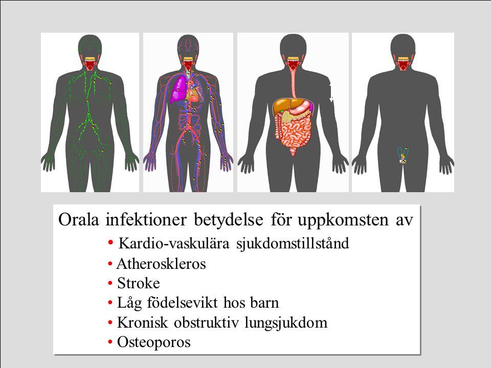 Orala infektioner betydelse för uppkomsten av Kardio-vaskulära sjukdomstillstånd Atheroskleros Stroke Låg födelsevikt hos barn Kronisk obstruktiv lung