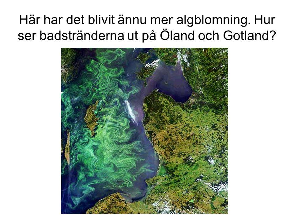 Här har det blivit ännu mer algblomning. Hur ser badstränderna ut på Öland och Gotland?