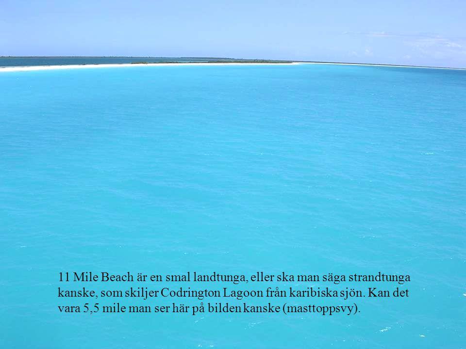 11 Mile Beach är en smal landtunga, eller ska man säga strandtunga kanske, som skiljer Codrington Lagoon från karibiska sjön.