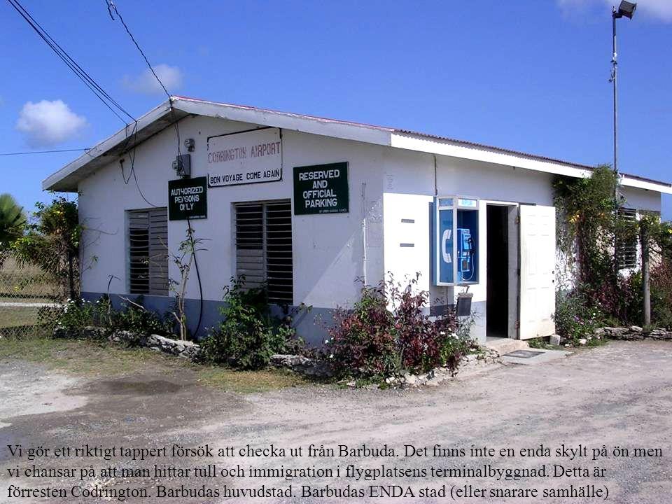 Vi gör ett riktigt tappert försök att checka ut från Barbuda.