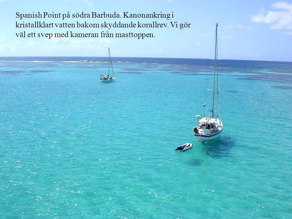 Spanish Point på södra Barbuda. Kanonankring i kristallklart vatten bakom skyddande korallrev.