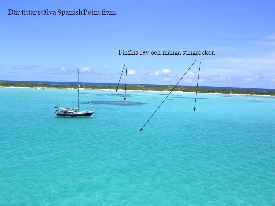 Där tittar själva Spanish Point fram. Finfina rev och många stingrockor.