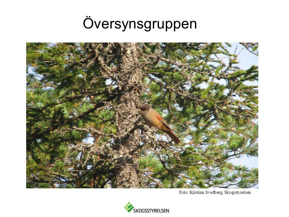 Foto: Kristian Svedberg, Skogsstyrelsen Översynsgruppen