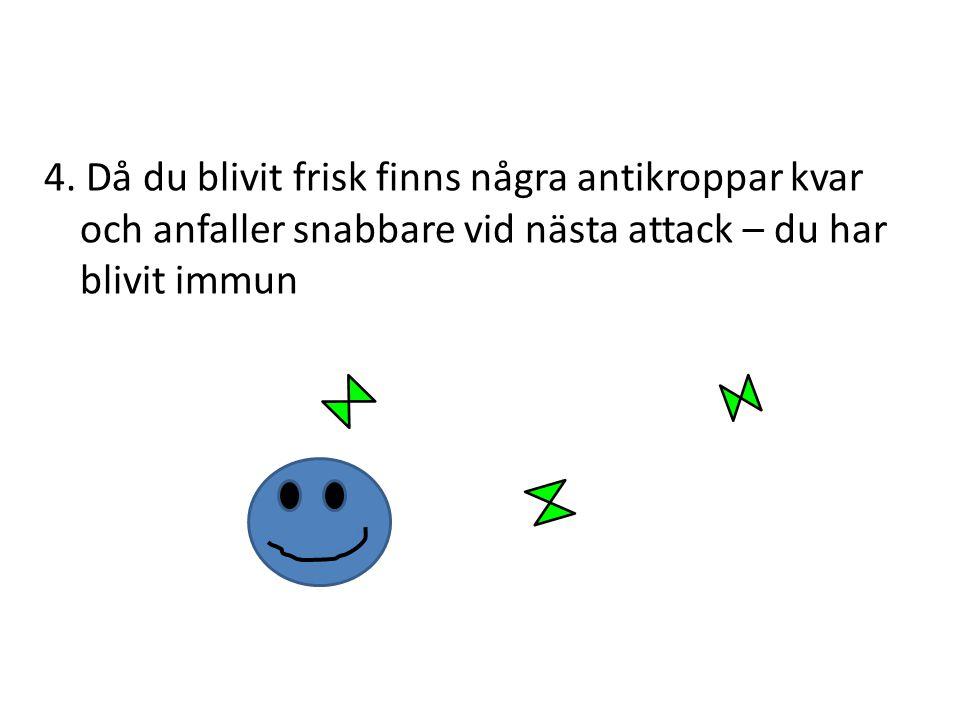 4. Då du blivit frisk finns några antikroppar kvar och anfaller snabbare vid nästa attack – du har blivit immun