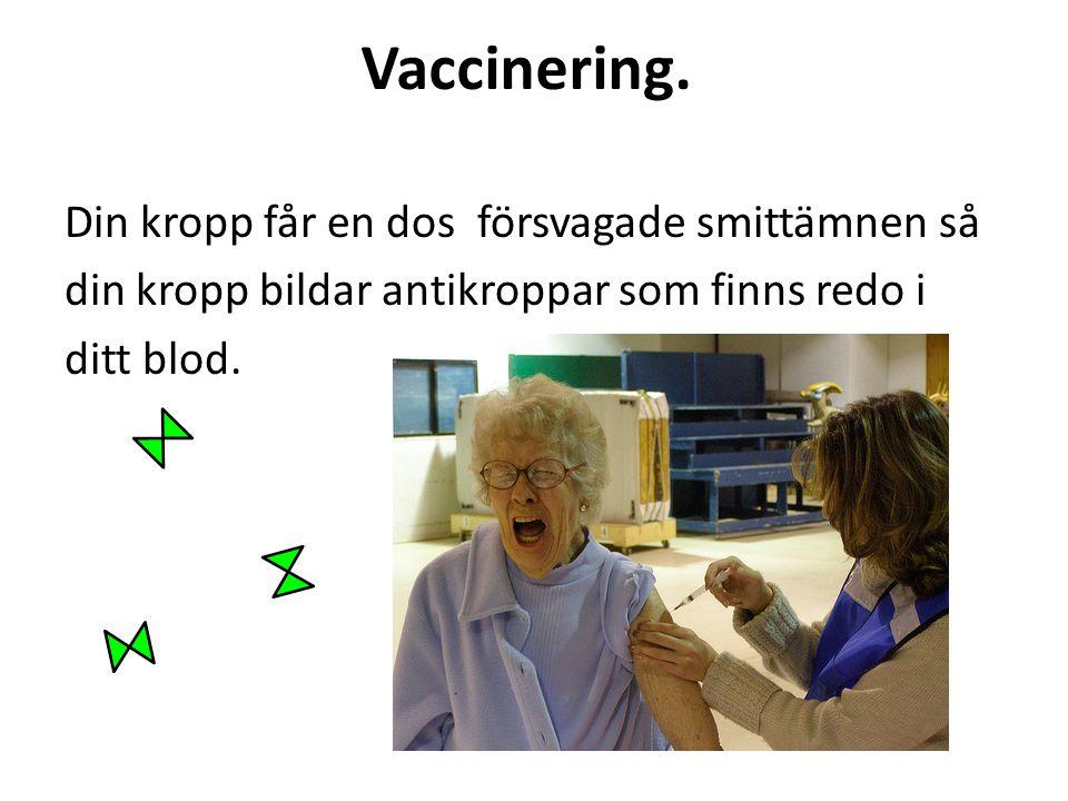 Vaccinering. Din kropp får en dos försvagade smittämnen så din kropp bildar antikroppar som finns redo i ditt blod.