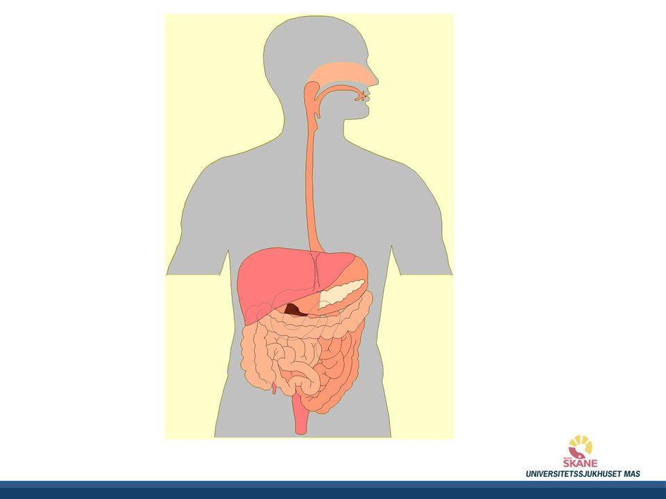 Uppåtstigande tjocktarmen Tvärgående tjocktarmen Nedåtstigande tjocktarmen Ändtarmen