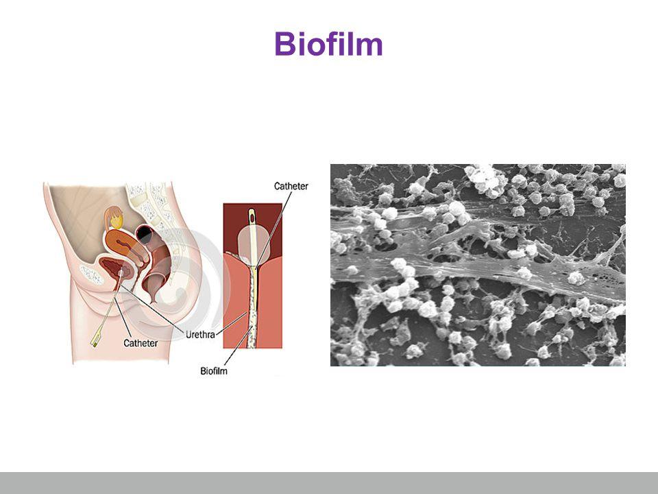 Biofilm skapas alltid Bakterier i biofilm är mer motståndskraftiga Biofilm innebär ökad infektionsrisk och aktivering av immunförsvaret