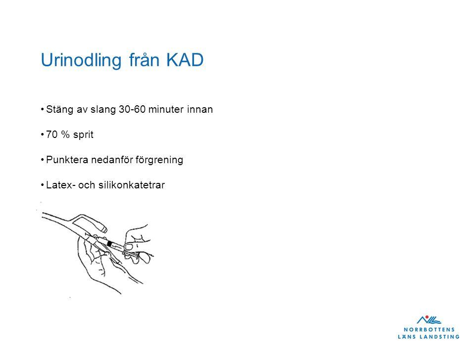 Urinodling från KAD Stäng av slang 30-60 minuter innan 70 % sprit Punktera nedanför förgrening Latex- och silikonkatetrar