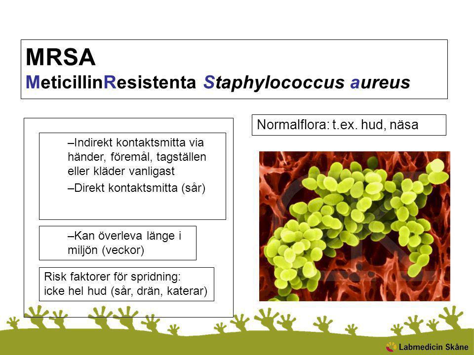 MRSA MeticillinResistenta Staphylococcus aureus –Indirekt kontaktsmitta via händer, föremål, tagställen eller kläder vanligast –Direkt kontaktsmitta (sår) –Kan överleva länge i miljön (veckor) Risk faktorer för spridning: icke hel hud (sår, drän, katerar) Normalflora: t.ex.