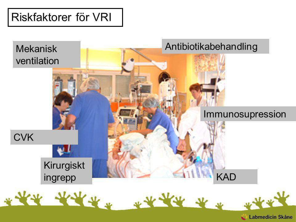 Placering av patienter med MRB Diskuteras alltid med vårdhygien/infektionskonsult Infektionskliniken Känd MRSA Misstänkt MRSA* + riskfaktorer för spridning ESBL + riskfaktorer för spridning VRE + riskfaktorer för spridning Övriga MRB + riskfaktorer för spridning Ordinarie vårdavdelning, eget rum med egen toalett VRE, ESBL, MRB UTAN riskfaktorer