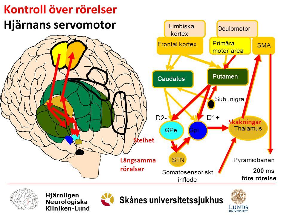 Hjärnligen Neurologiska Kliniken-Lund Skånes universitetssjukhus Limbiska kortex Frontal kortex Oculomotor Primära motor area SMA Caudatus Putamen Sub