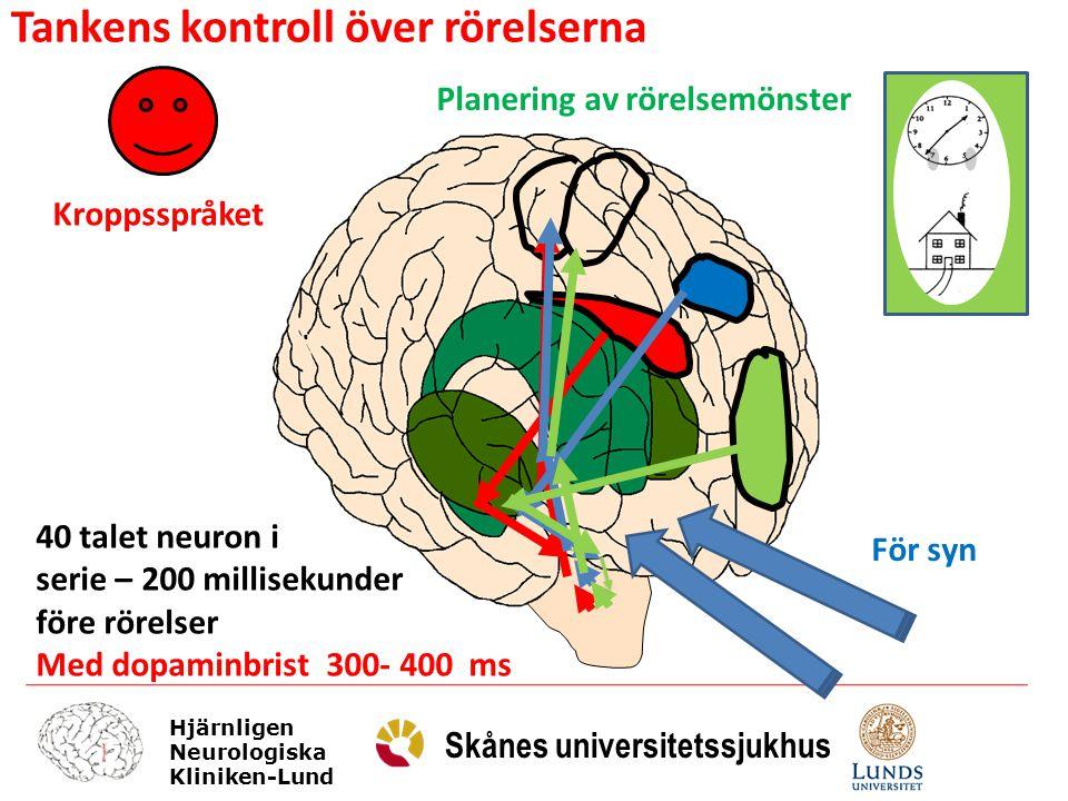 Hjärnligen Neurologiska Kliniken-Lund Skånes universitetssjukhus Kroppsspråket För syn Planering av rörelsemönster 40 talet neuron i serie – 200 milli