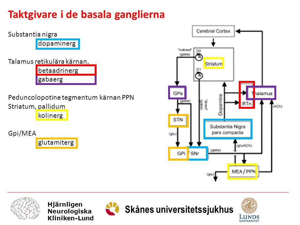 Hjärnligen Neurologiska Kliniken-Lund Skånes universitetssjukhus Taktgivare i de basala ganglierna Substantia nigra dopaminerg Talamus retikulära kärn