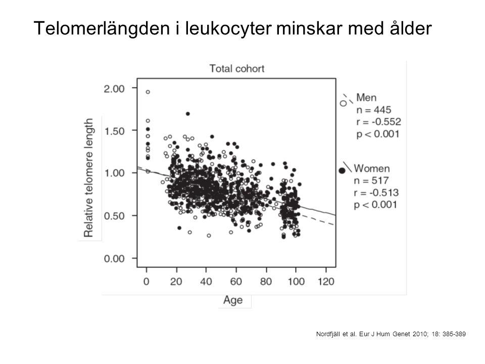 Telomerlängden i leukocyter minskar med ålder Nordfjäll et al. Eur J Hum Genet 2010; 18: 385-389
