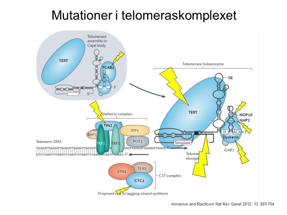 Mutationer i telomeraskomplexet Armanios and Blackburn Nat Rev Genet 2012; 13, 693-704