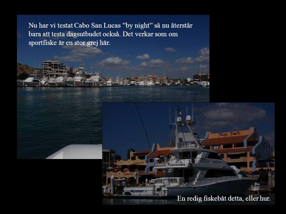 """Nu har vi testat Cabo San Lucas """"by night"""" så nu återstår bara att testa dagsutbudet också. Det verkar som om sportfiske är en stor grej här. En redig"""