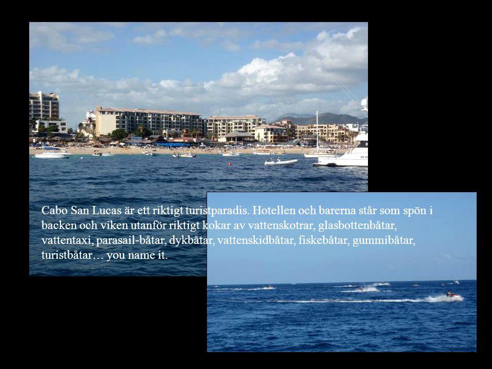 Cabo San Lucas är ett riktigt turistparadis. Hotellen och barerna står som spön i backen och viken utanför riktigt kokar av vattenskotrar, glasbottenb
