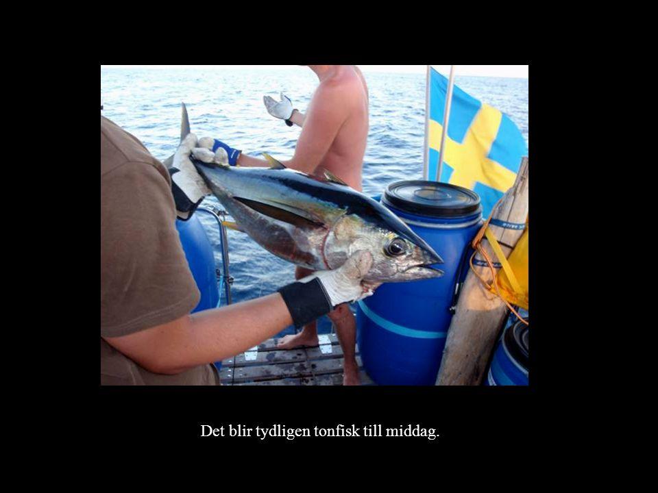 Det blir tydligen tonfisk till middag.
