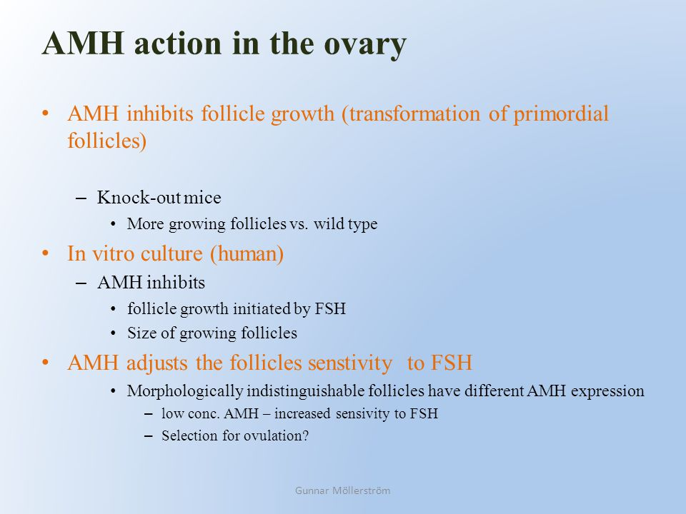 AMH action in the ovary AMH inhibits follicle growth (transformation of primordial follicles) – Knock-out mice More growing follicles vs. wild type In