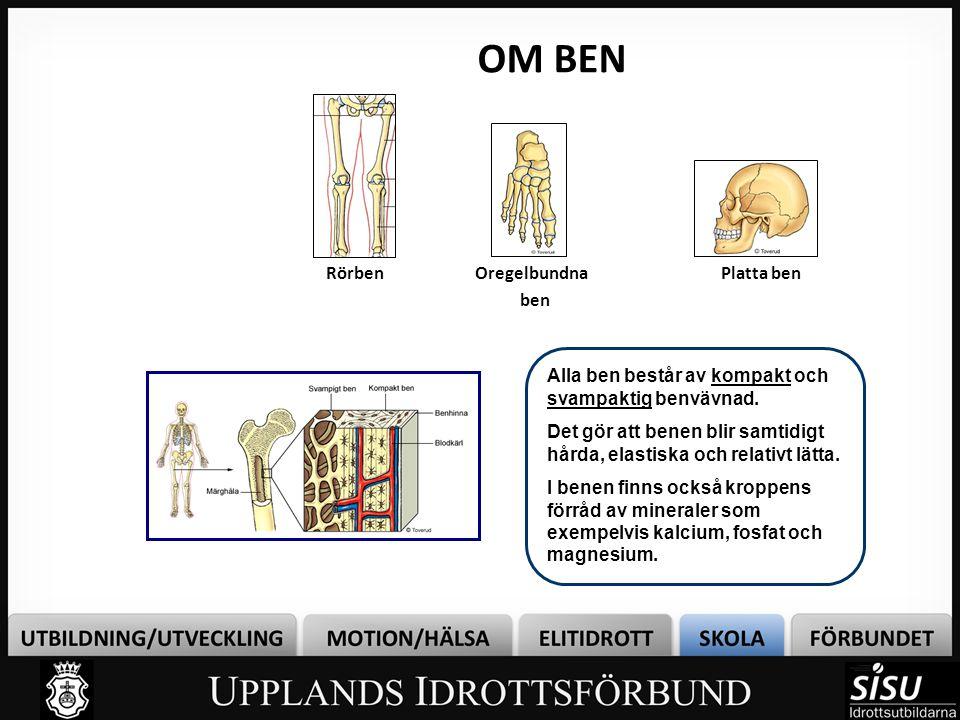 OM BEN Rörben Alla ben består av kompakt och svampaktig benvävnad. Det gör att benen blir samtidigt hårda, elastiska och relativt lätta. I benen finns