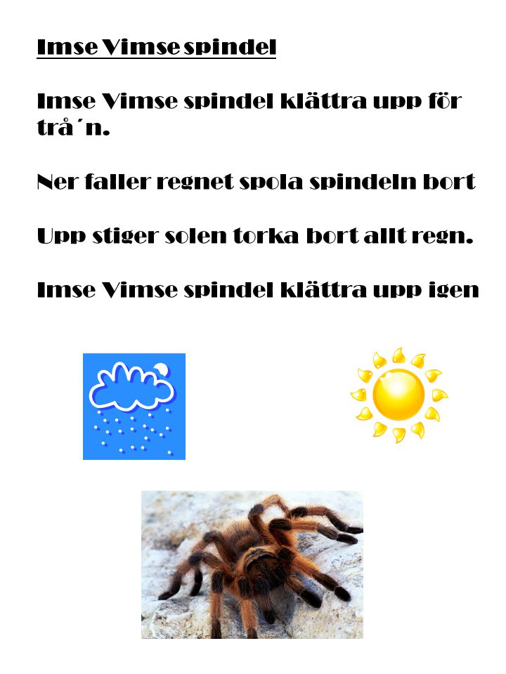 Imse Vimse spindel Imse Vimse spindel klättra upp för trå´n. Ner faller regnet spola spindeln bort Upp stiger solen torka bort allt regn. Imse Vimse s