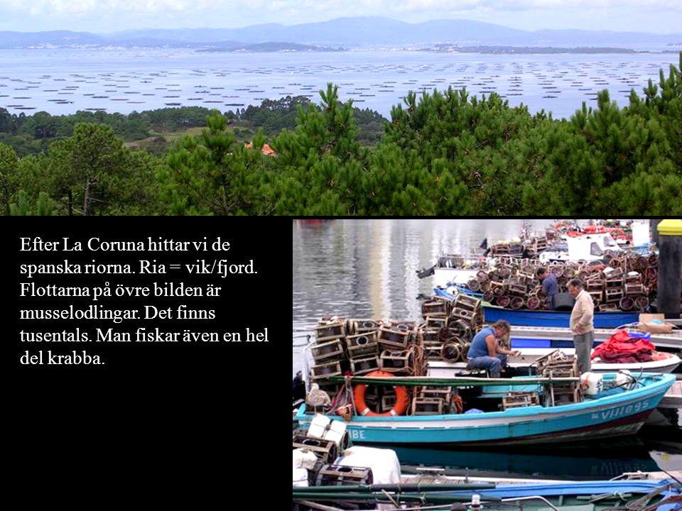 Efter La Coruna hittar vi de spanska riorna. Ria = vik/fjord. Flottarna på övre bilden är musselodlingar. Det finns tusentals. Man fiskar även en hel